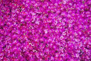 sfondo rosa rosa foto