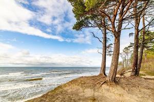 pini sul bordo della duna bluff presso la spiaggia del mar baltico foto