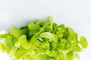 primo piano quercia verde su bianco foto