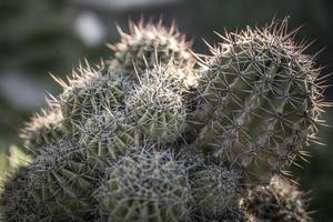 famiglia di sfondo di cactus foto