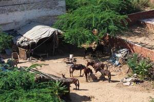 vista dal forte di neemrana nel rajasthan, india foto