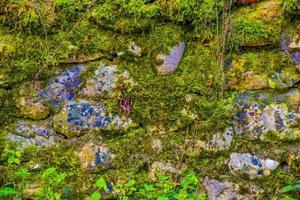 parete di roccia con muschio foto
