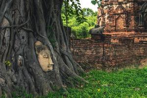 testa di buddha incastonata in un albero di banyan ad ayutthaya, in thailandia foto