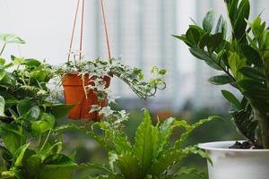 concetto di casa e giardino sul balcone foto