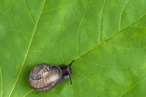lumache di terra sulla pianta, primo piano foto