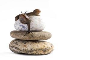 lumaca di vite sulla pila di pietre spa su sfondo bianco foto