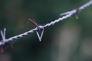 recinto di filo spinato metallico foto
