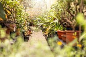percorso in un giardino primaverile tra piante in vaso e alberi. primavera. foto