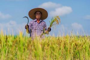 contadino asiatico che lavora nel campo di riso sotto il cielo blu foto