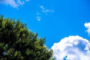 albero e cielo foto