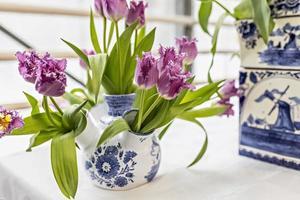 tulipani viola in un vaso in giardino. primavera. fioritura. foto