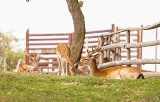 cervi selvatici habitat naturale parco selvaggio adatto alle famiglie foto