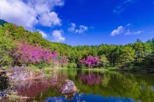 albero del lago khun wang inthanon chiang mai thailandia foto