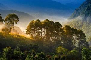 la mattina della foresta ha un mare di nebbia ang khang chiang mai thailandia foto