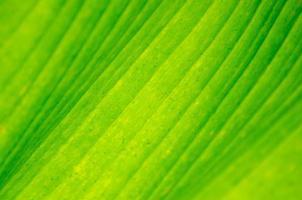 sfondo primo piano foglia di banana verde foglia di banana sfondo astratto foto