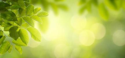 foglia sfondo bokeh sfocatura sfondo verde foto