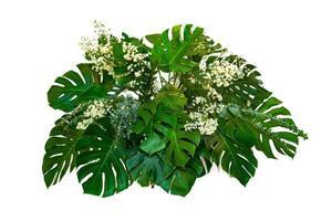 foglie di mostro utilizzate nei disegni moderni foglie tropicali fogliame pianta cespuglio composizione floreale natura sfondo isolato foto