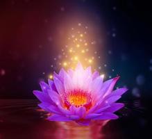 loto rosa chiaro viola galleggiante luce scintillante sfondo viola foto