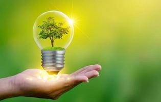 la foresta e gli alberi sono nella luce. concetti di conservazione ambientale e impianto di riscaldamento globale che cresce all'interno della lampadina su terreno asciutto per salvare il concetto di terra foto