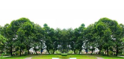 banner sfondo bianco albero panorama foto