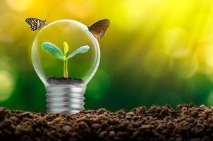 la lampadina si trova all'interno con foglie di bosco e gli alberi sono alla luce. concetti di conservazione ambientale e impianto di riscaldamento globale che cresce all'interno della lampadina su asciutto foto