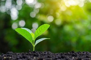 piantare piantine giovani piante alla luce del mattino sullo sfondo della natura foto