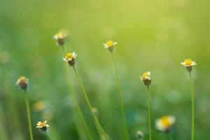 le foglie sfocano l'erba verde fresca poco profonda il paesaggio delle piante verdi naturali utilizzando come sfondo o carta da parati foto