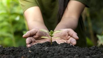 giardinieri piantano alberi o piantine su sfondo verde sfocato concetto di conservazione della foresta. foto