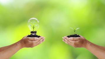 scambio di alberi e alberi piantati in lampadine per risparmiare energia delle mani umane, giornata della terra e idee per la conservazione dell'ambiente. foto