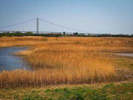 canneti a far ings riserva naturale del nord lincolnshire con una vista del ponte humber foto