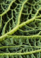 primo piano della composizione della consistenza del cibo nutriente foto