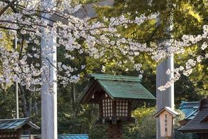bellissimo fiore di pesco a tokyo alla luce del giorno foto