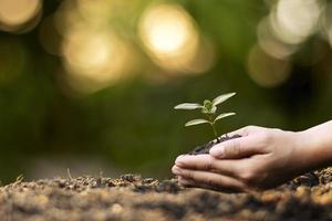 mani umane che piantano piantine o alberi nella giornata della terra del suolo e nella campagna di riscaldamento globale. foto