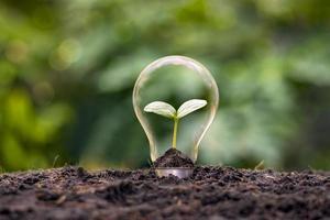 un albero che cresce in una lampadina ad alta efficienza energetica, il concetto di opzioni energetiche ecocompatibili e sostenibili. foto