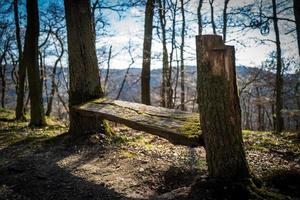 una panchina nel bosco di boppard foto