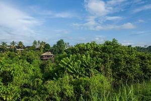 la passeggiata sulla cresta del campuhan a ubud a bali foto