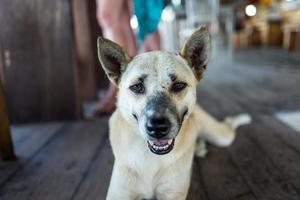 cane di strada al bar a bali foto