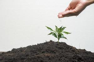 mano umana che pianta un albero su sfondo bianco, salva il concetto di terra foto
