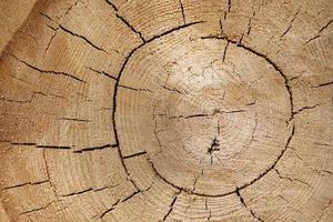 struttura in legno di un tronco d'albero con bellissime sfumature dorate. foto