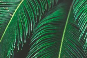 foglie di palma tropicale, sfondo con motivo floreale foto