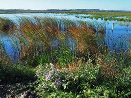 Habitat delle zone umide a St Aidans Nature Park West Yorkshire England foto