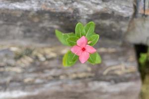 il primo piano del fiore viola sta sbocciando foto