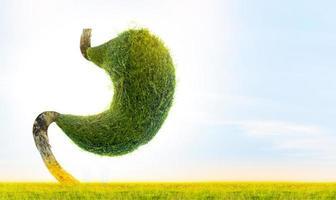 stomaco umano modellato da alberi verdi, concetto di ambiente foto