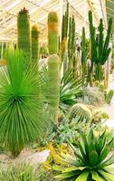 piante verdi del deserto foto