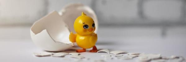 guscio d'uovo bianco di un uovo di gallina rotto con frammenti e un pollo covato isolato. striscione.pasqua foto
