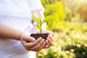 bokeh sfondo verde mano femminile che tiene albero sul campo della natura erba conservazione della foresta concept foto