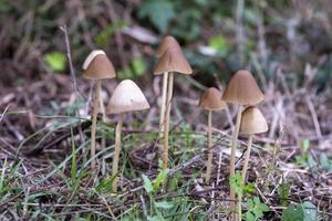 famiglia di funghi selvatici nata in un bosco foto