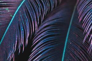 foglie di palma tropicale in colore viola motivo floreale astratto sfondo foto