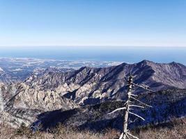 il vecchio albero sulla vetta e la bellissima vista sulle montagne seoraksan. Corea del Sud foto