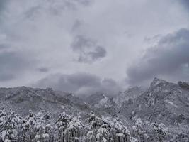 pineta sotto la neve e grandi montagne sullo sfondo. parco nazionale di seoraksan, Corea del sud. inverno 2018 foto